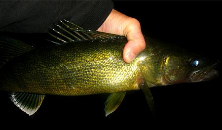 Click image for larger version.  Name:walleye 10-16.jpg Views:0 Size:35.7 KB ID:21222