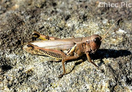 Click image for larger version.  Name:grasshoppermarked.jpg Views:0 Size:106.5 KB ID:21246