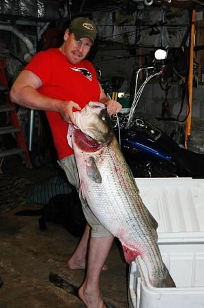 Click image for larger version.  Name:wr striiped bass1.jpg Views:1 Size:52.4 KB ID:13872