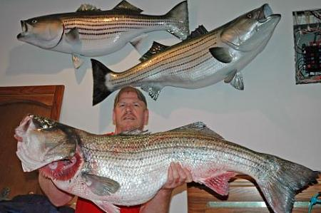 Click image for larger version.  Name:wr striiped bass12.jpg Views:1 Size:28.5 KB ID:13883