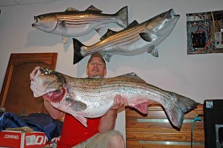 Click image for larger version.  Name:wr striiped bass13.jpg Views:1 Size:28.1 KB ID:13884