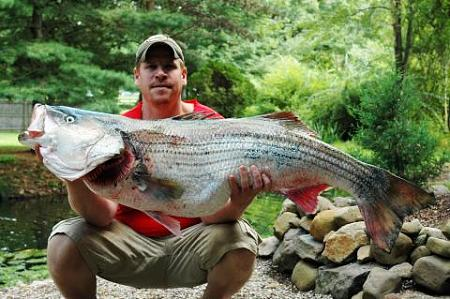 Click image for larger version.  Name:wr striiped bass15.jpg Views:1 Size:38.9 KB ID:13886